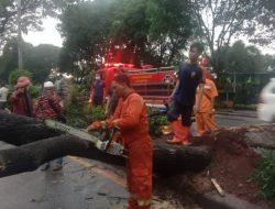 Hujan Deras dan Angin Kencang, Pohon di Depok Tumbang